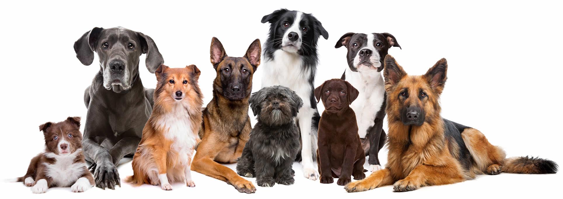 Hundefutter Vergleich gutes Futter für Hunde