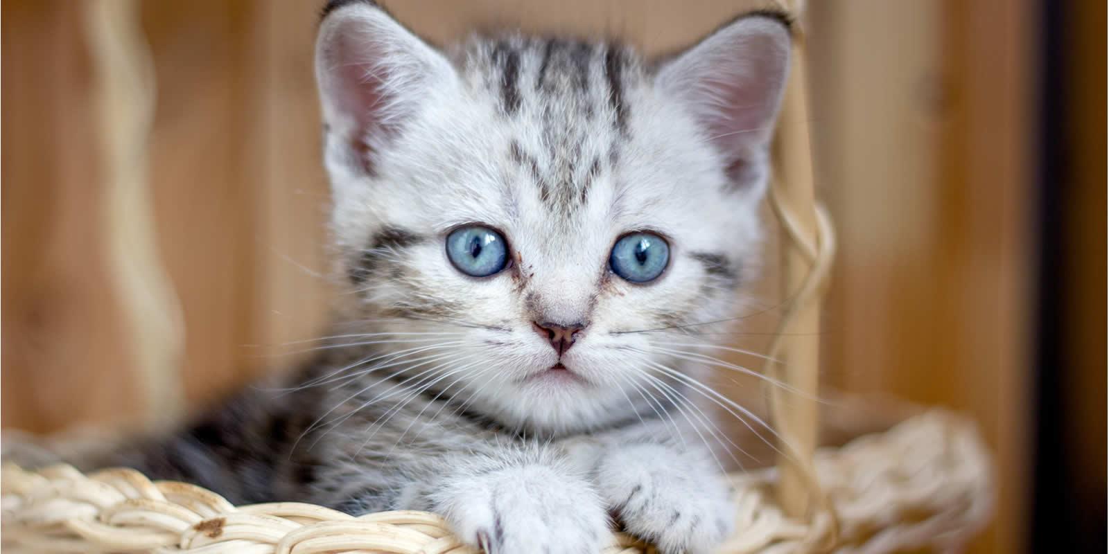 Katzenallergie Symptome und Hilfe bei einer Allergie gegen Katzen