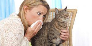 Katzenallergie Symptome und Behandlung